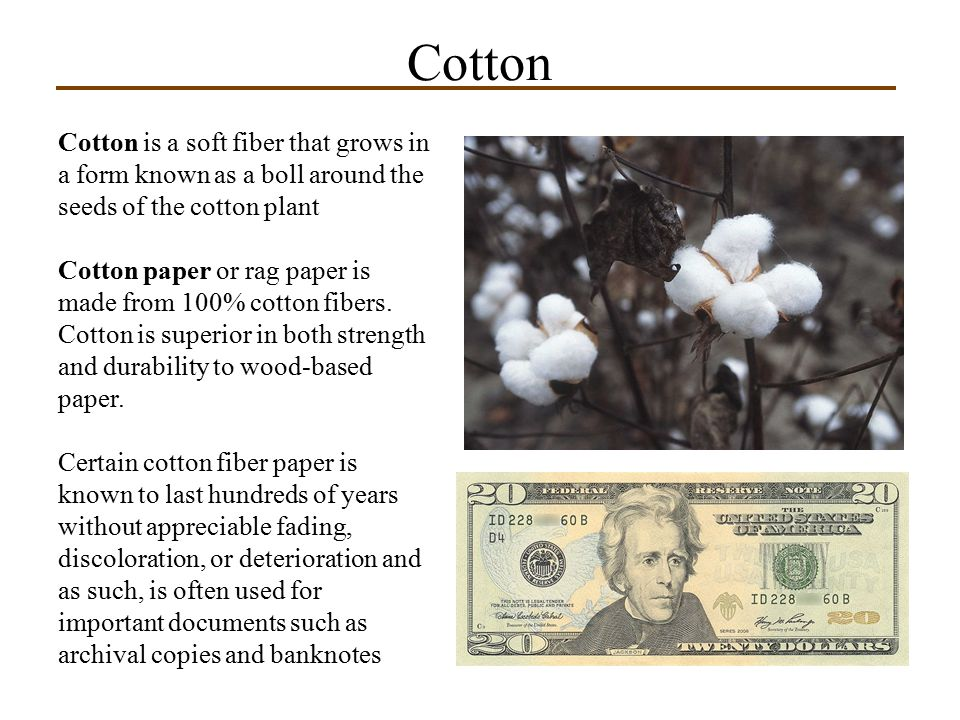 Cotton Cotton is a soft fiber that grows in a form known as a boll around the seeds of the cotton plant.