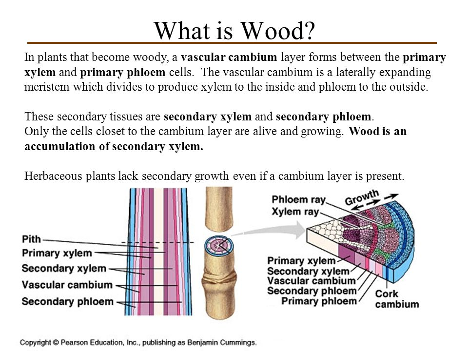 What is Wood