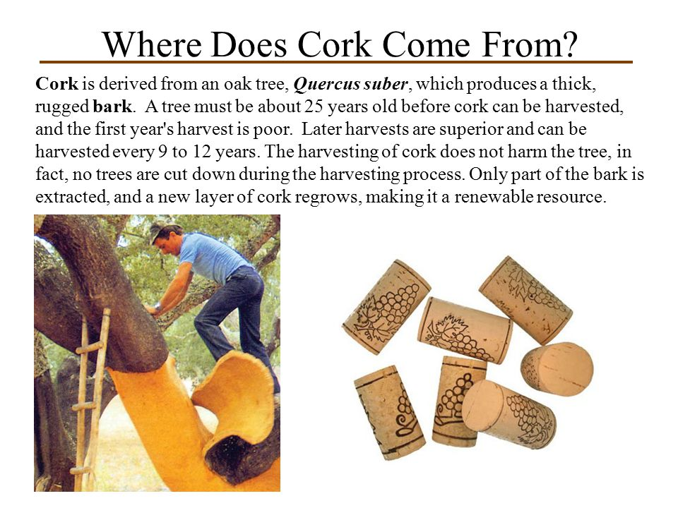 Where Does Cork Come From