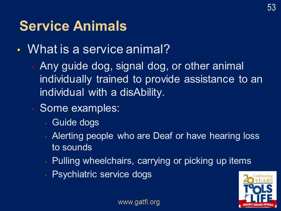 Service Animals What is a service animal