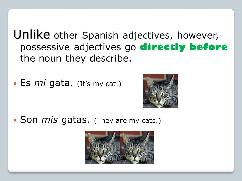 Unlike other Spanish adjectives, however, possessive adjectives go directly before the noun they describe.