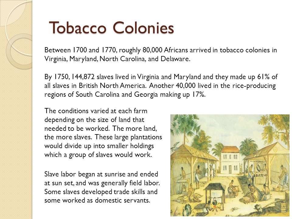 Tobacco Colonies Between 1700 and 1770, roughly 80,000 Africans arrived in tobacco colonies in Virginia, Maryland, North Carolina, and Delaware.