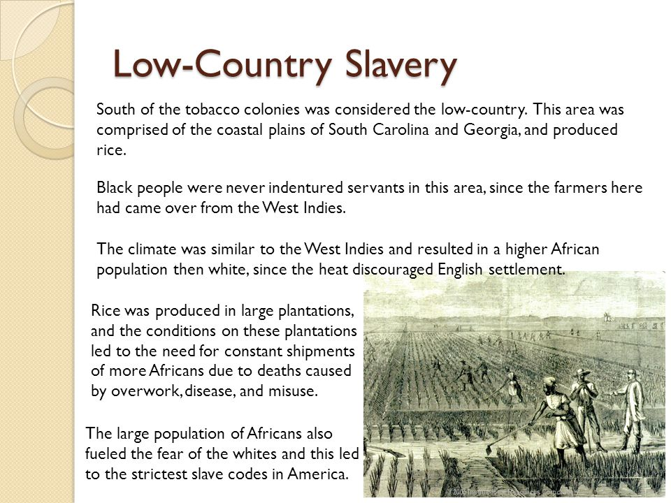 Low-Country Slavery