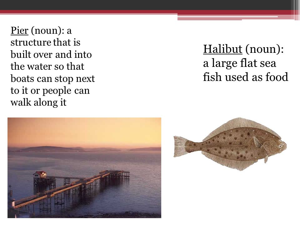 Halibut (noun): a large flat sea fish used as food