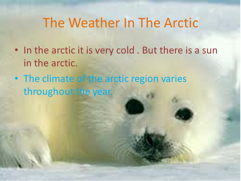 The Weather In The Arctic