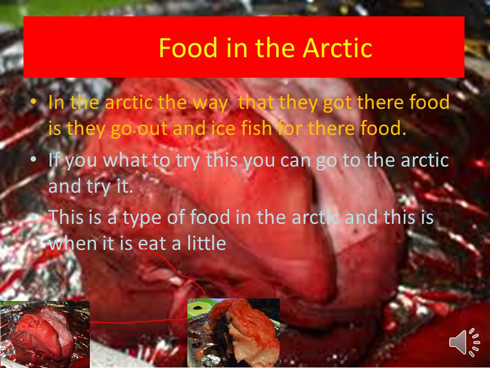 Food in the Arctic In the arctic the way that they got there food is they go out and ice fish for there food.