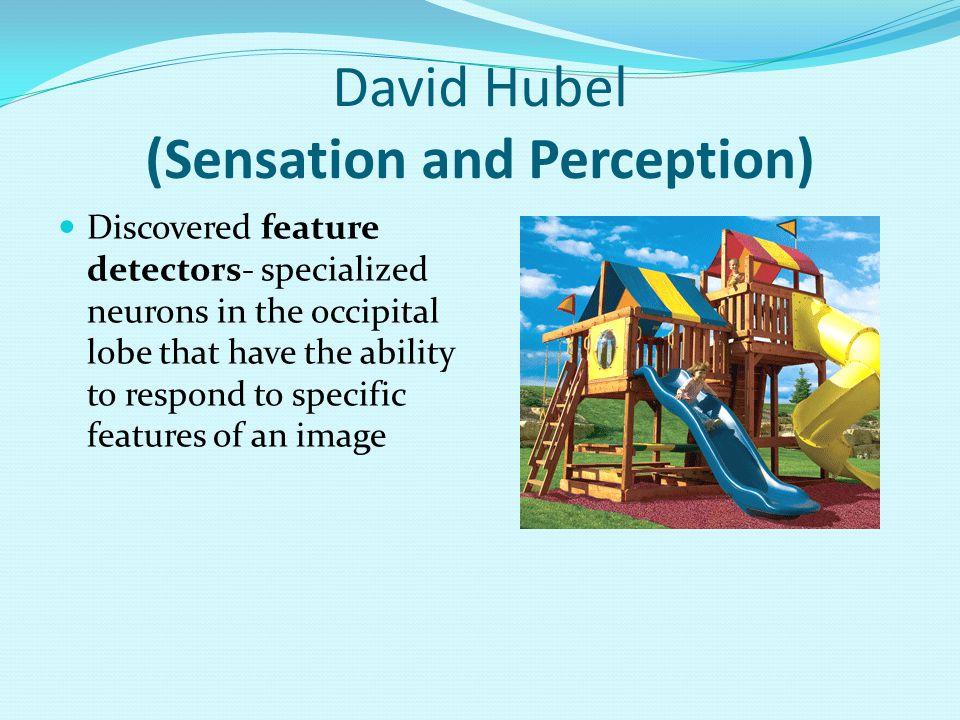 David Hubel (Sensation and Perception)