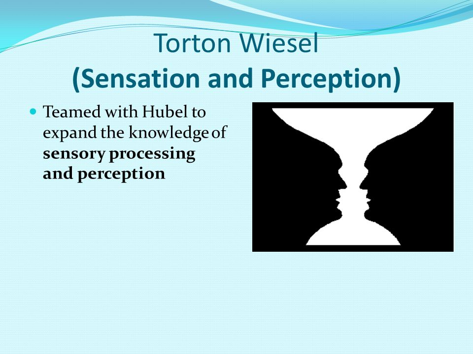 Torton Wiesel (Sensation and Perception)
