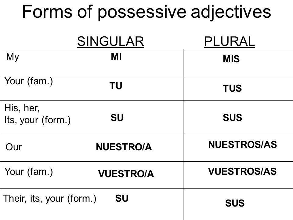 Forms of possessive adjectives