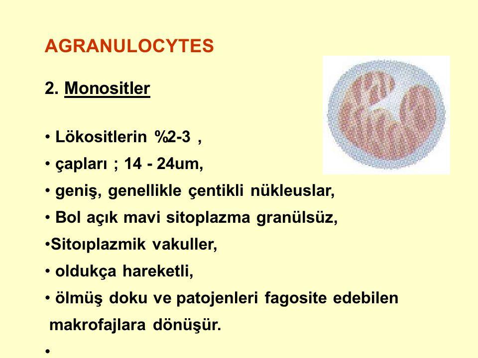AGRANULOCYTES 2. Monositler Lökositlerin %2-3 , çapları ; 14 - 24um,