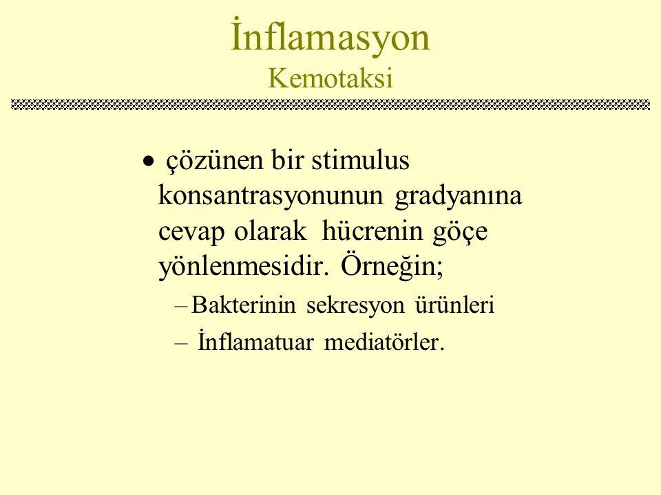 İnflamasyon Kemotaksi