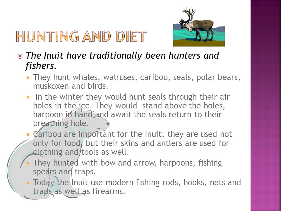 Hunting and Diet The Inuit have traditionally been hunters and fishers.