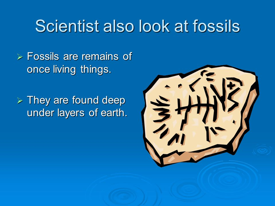 Scientist also look at fossils