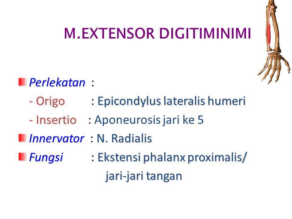 M.EXTENSOR DIGITIMINIMI