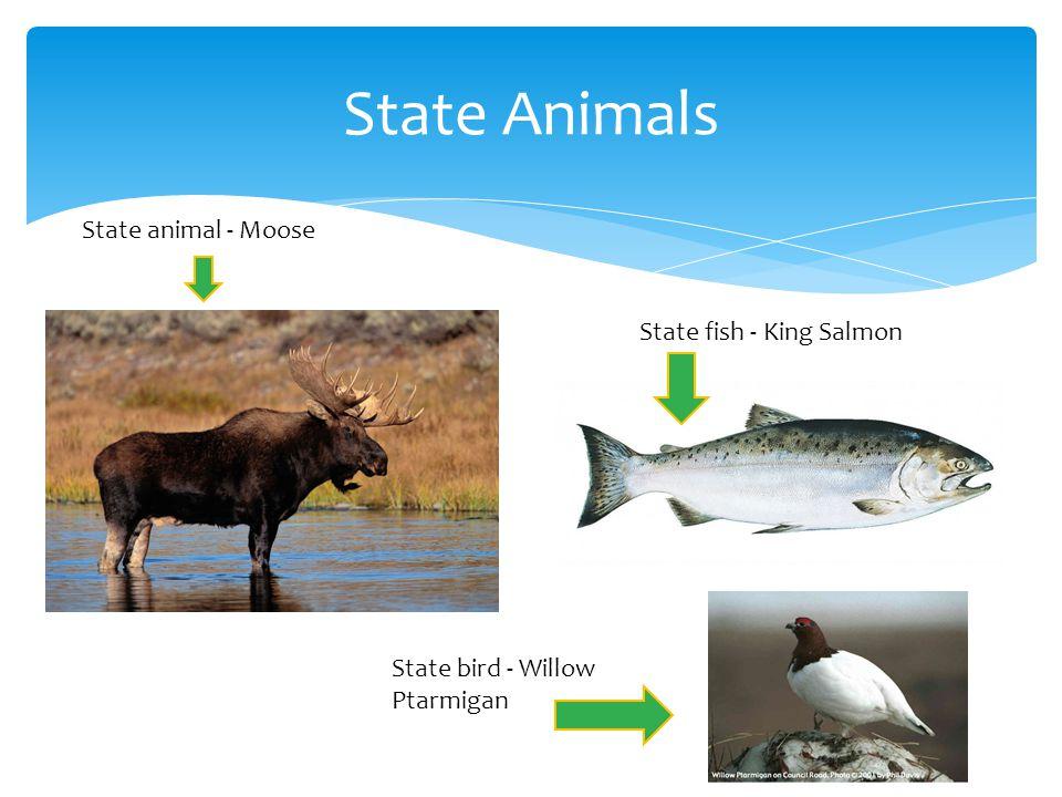 State Animals State animal - Moose State fish - King Salmon