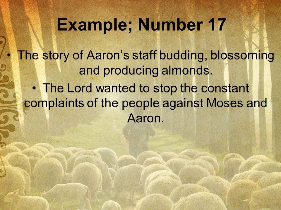 The story of Aaron's staff budding, blossoming and producing almonds.