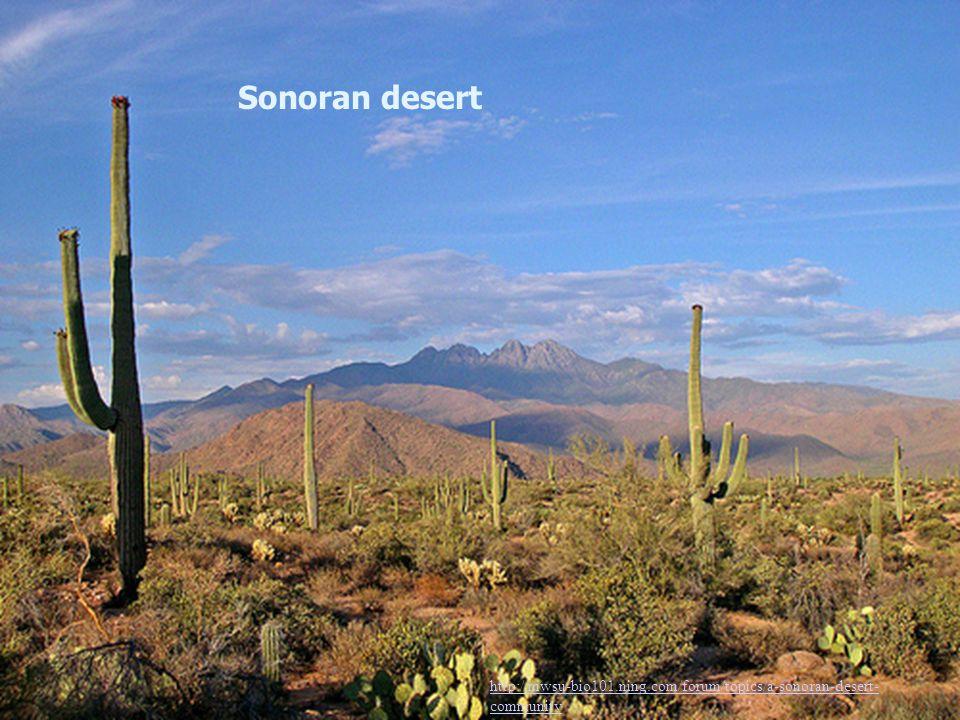 Sonoran desert http://mwsu-bio101.ning.com/forum/topics/a-sonoran-desert-community