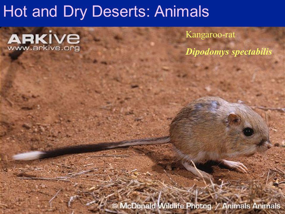 Hot and Dry Deserts: Animals