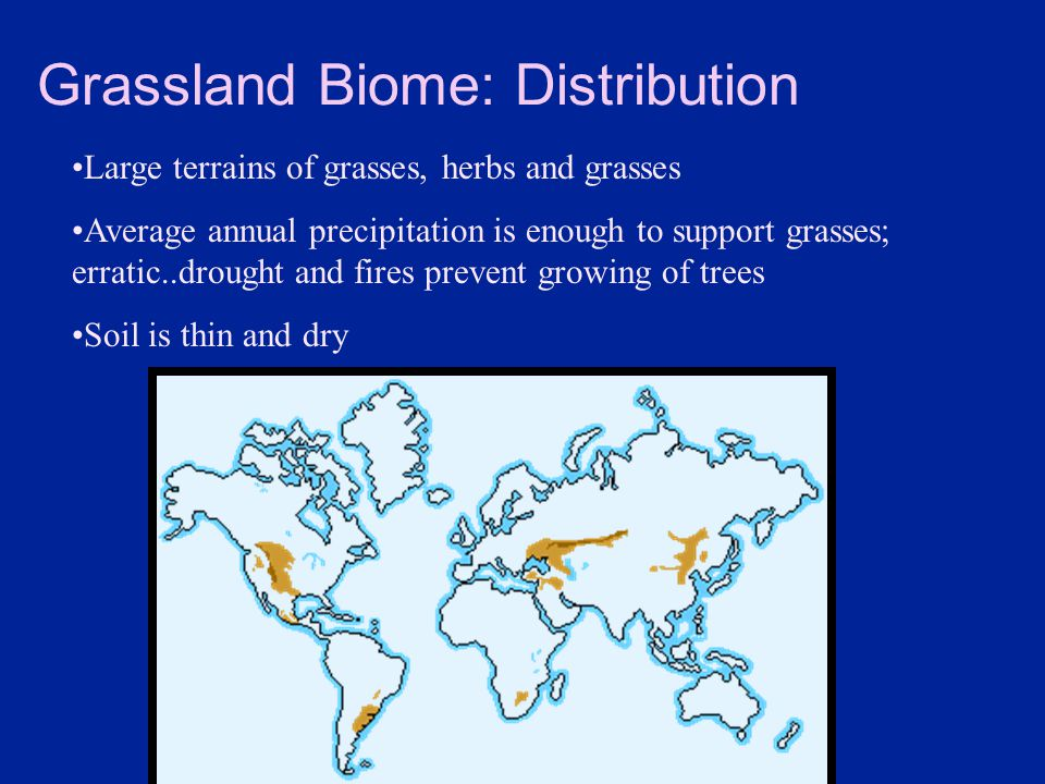 Grassland Biome: Distribution