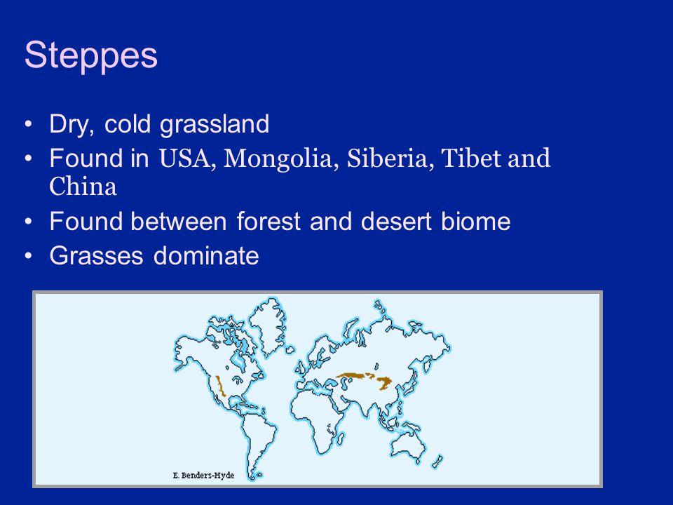 Steppes Dry, cold grassland