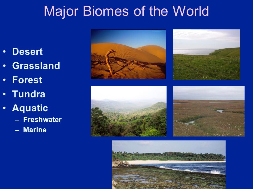 Major Biomes of the World