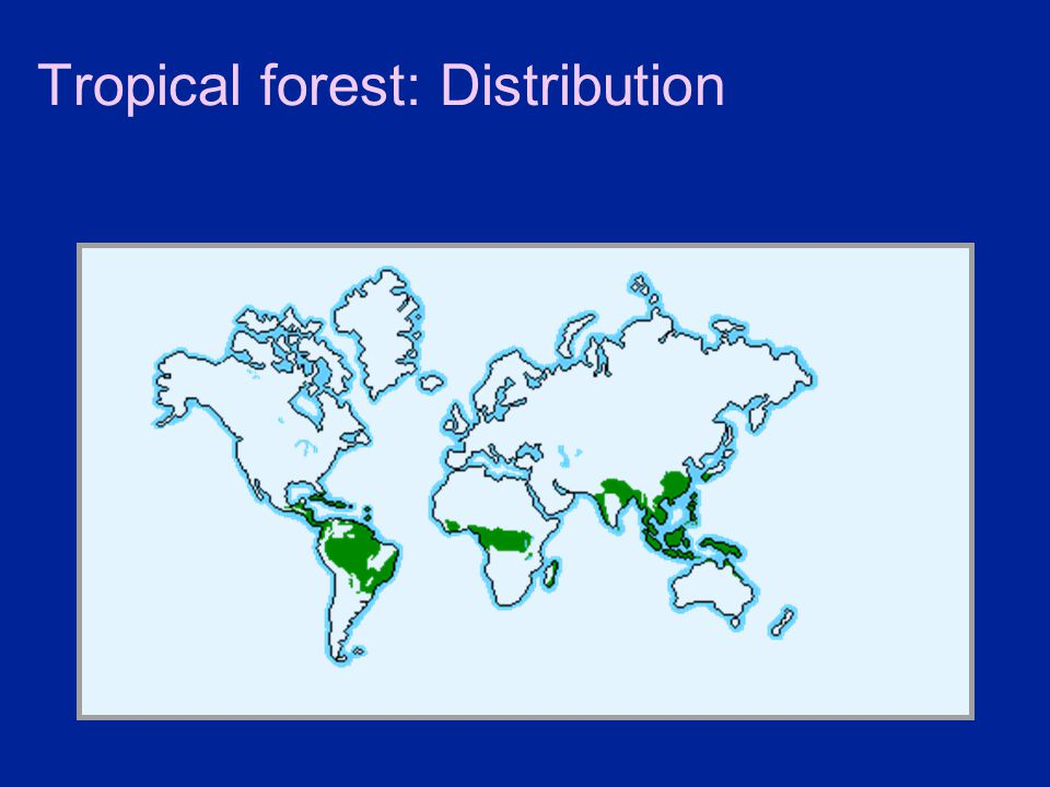 Tropical forest: Distribution