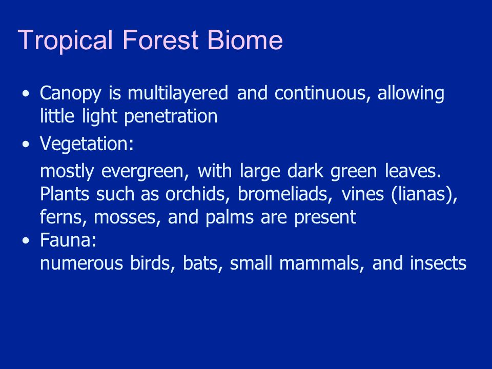 Tropical Forest Biome Canopy is multilayered and continuous, allowing little light penetration. Vegetation: