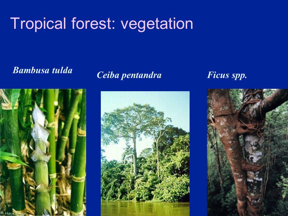 Tropical forest: vegetation