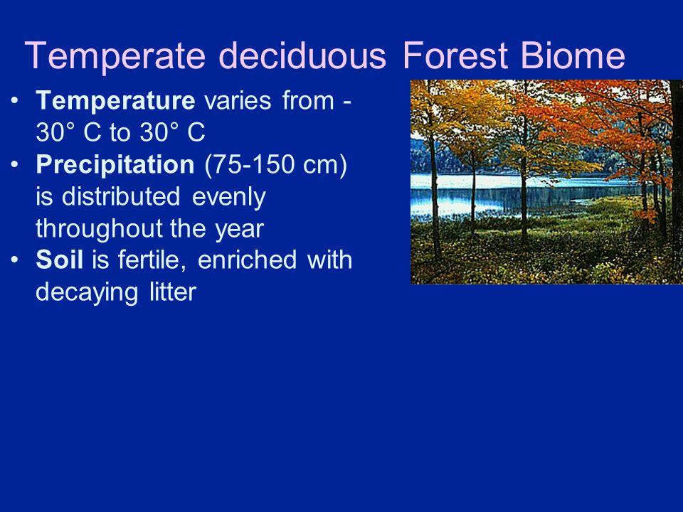 Temperate deciduous Forest Biome