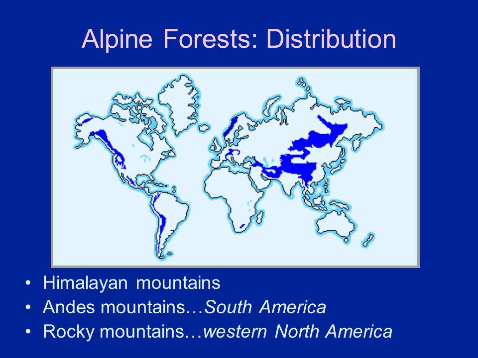 Alpine Forests: Distribution