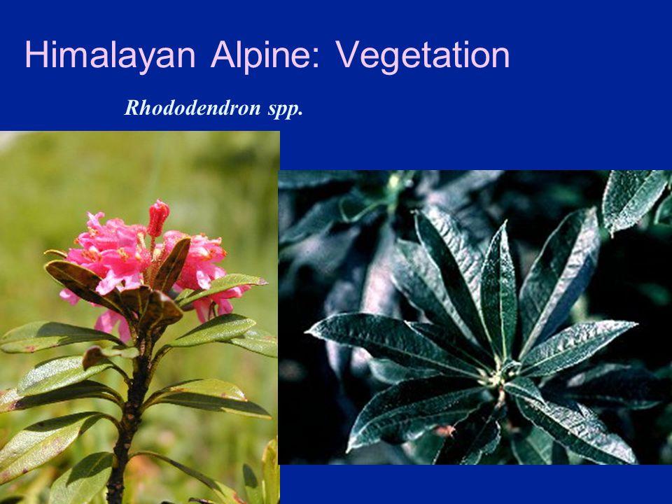 Himalayan Alpine: Vegetation