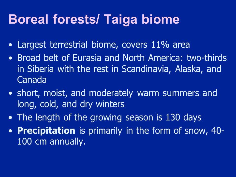 Boreal forests/ Taiga biome