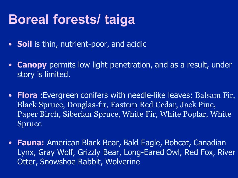 Boreal forests/ taiga Soil is thin, nutrient-poor, and acidic