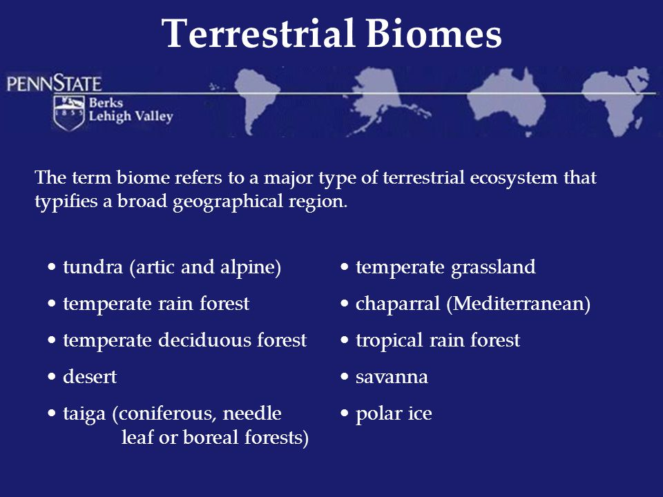 Terrestrial Biomes tundra (artic and alpine) temperate rain forest
