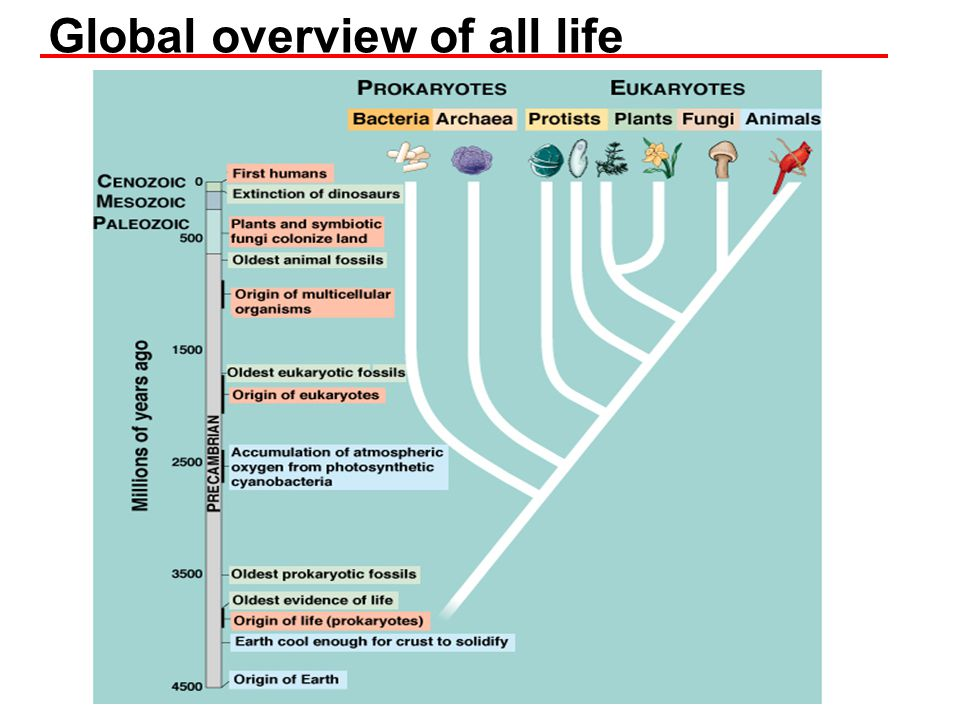 Global overview of all life