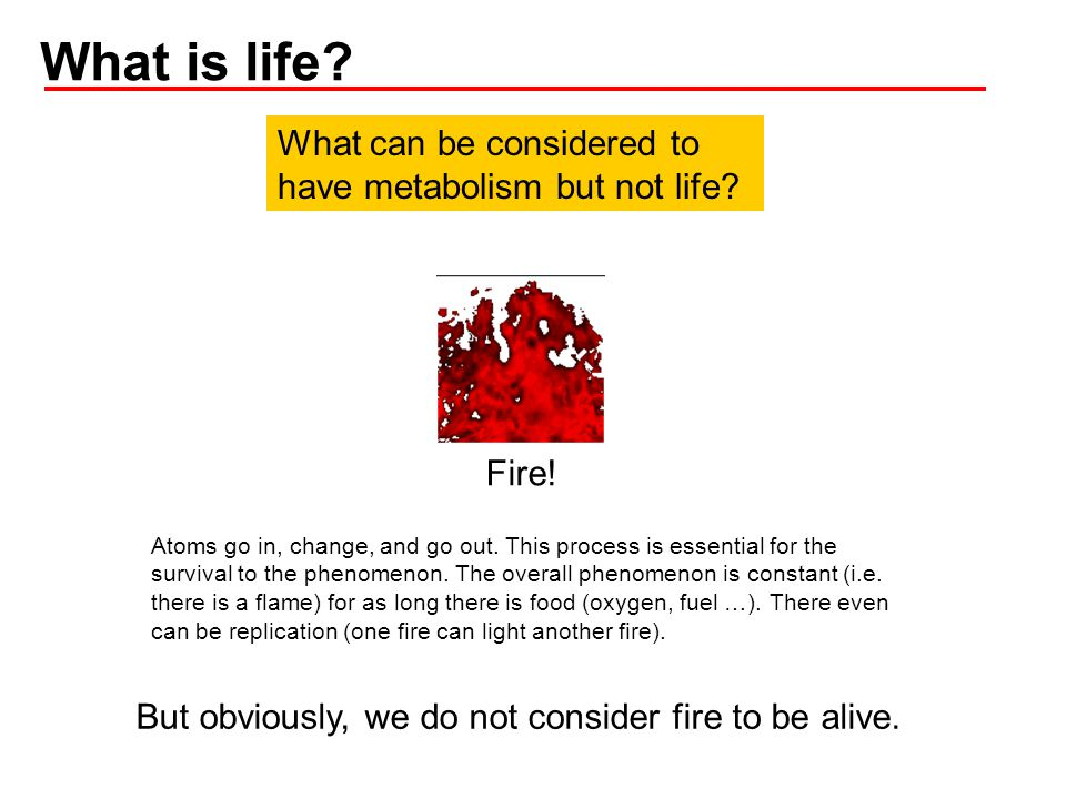 What is life What can be considered to have metabolism but not life