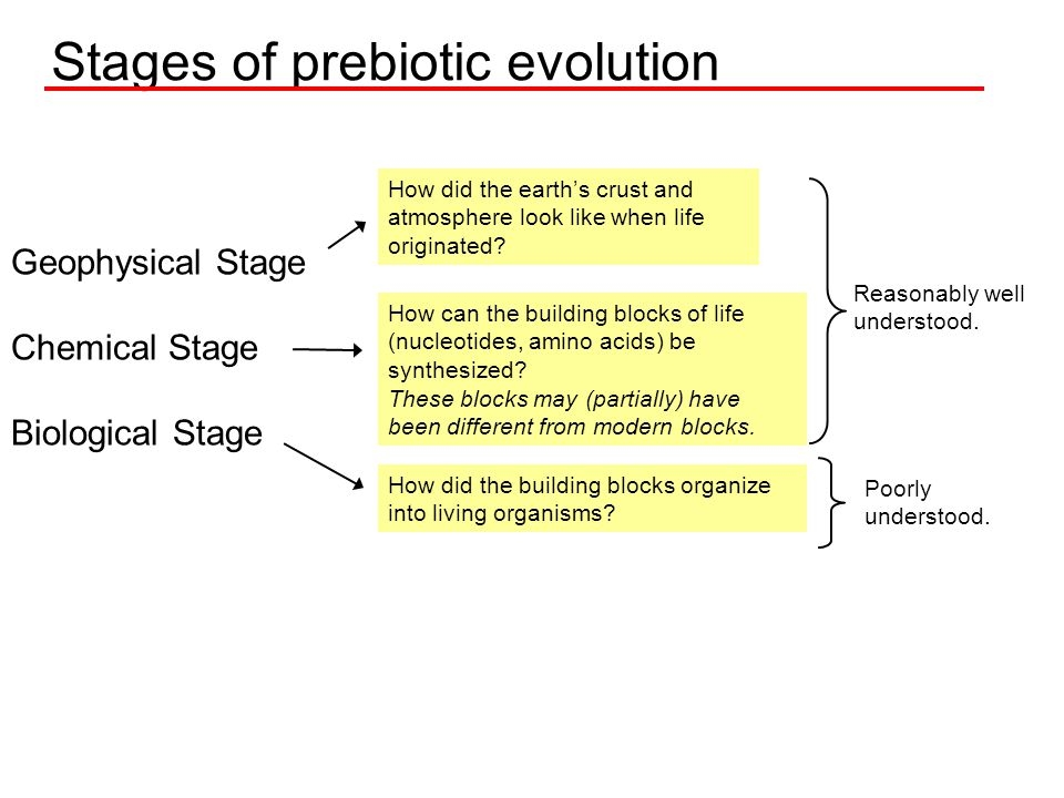 Stages of prebiotic evolution