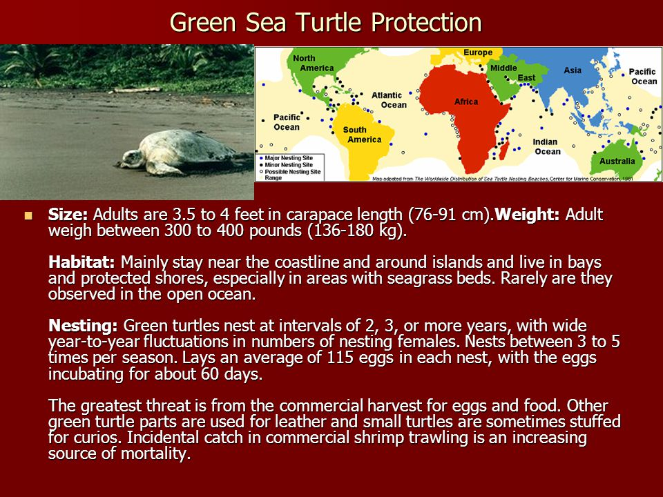 Green Sea Turtle Protection