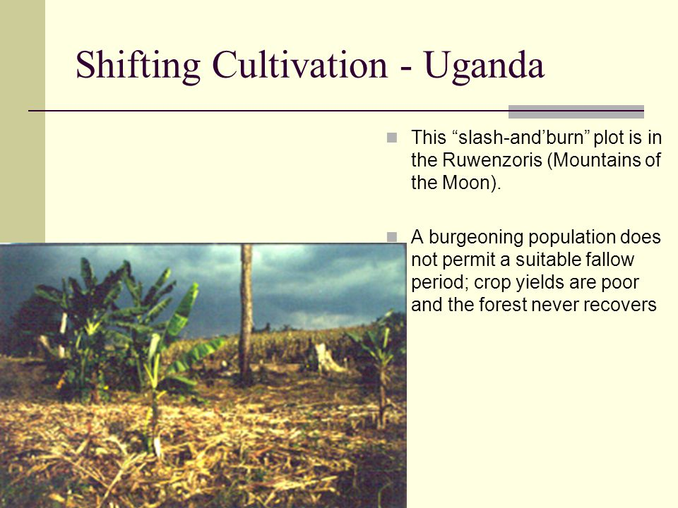 Shifting Cultivation - Uganda