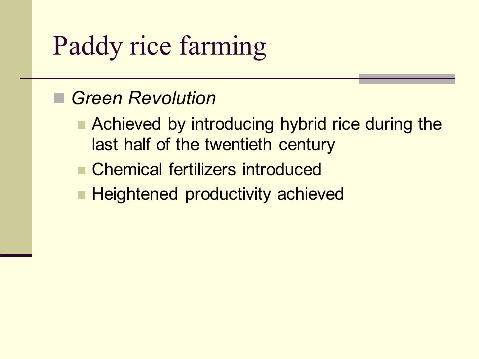 Paddy rice farming Green Revolution