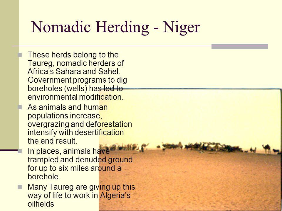 Nomadic Herding - Niger