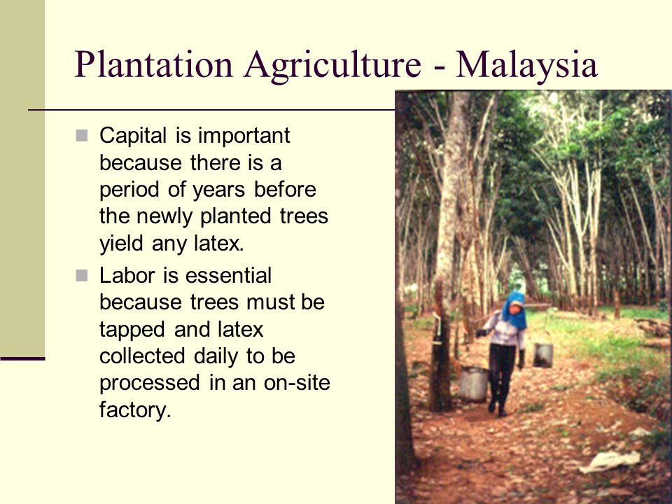 Plantation Agriculture - Malaysia