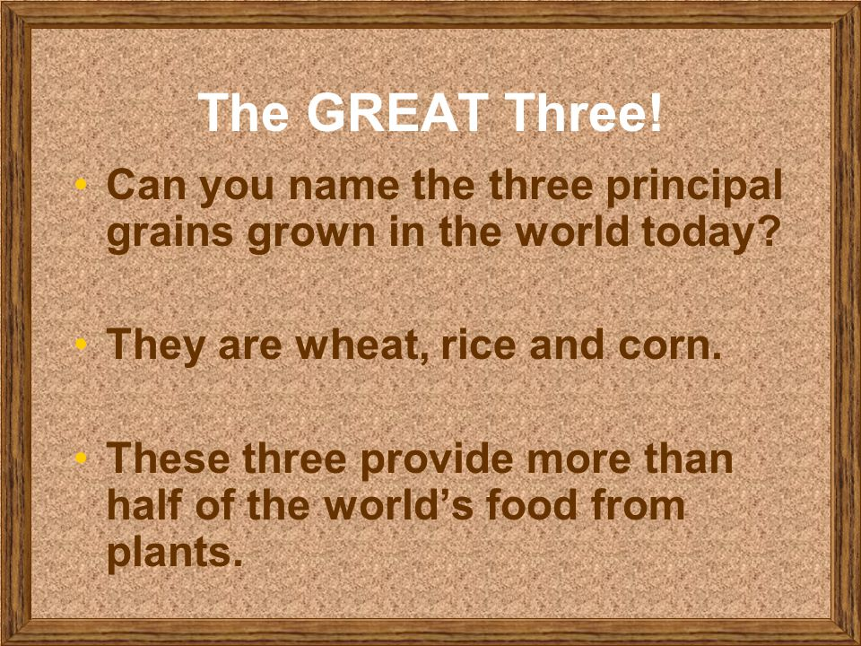 The GREAT Three! Can you name the three principal grains grown in the world today They are wheat, rice and corn.