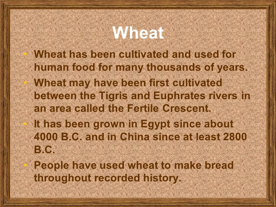 Wheat Wheat has been cultivated and used for human food for many thousands of years.