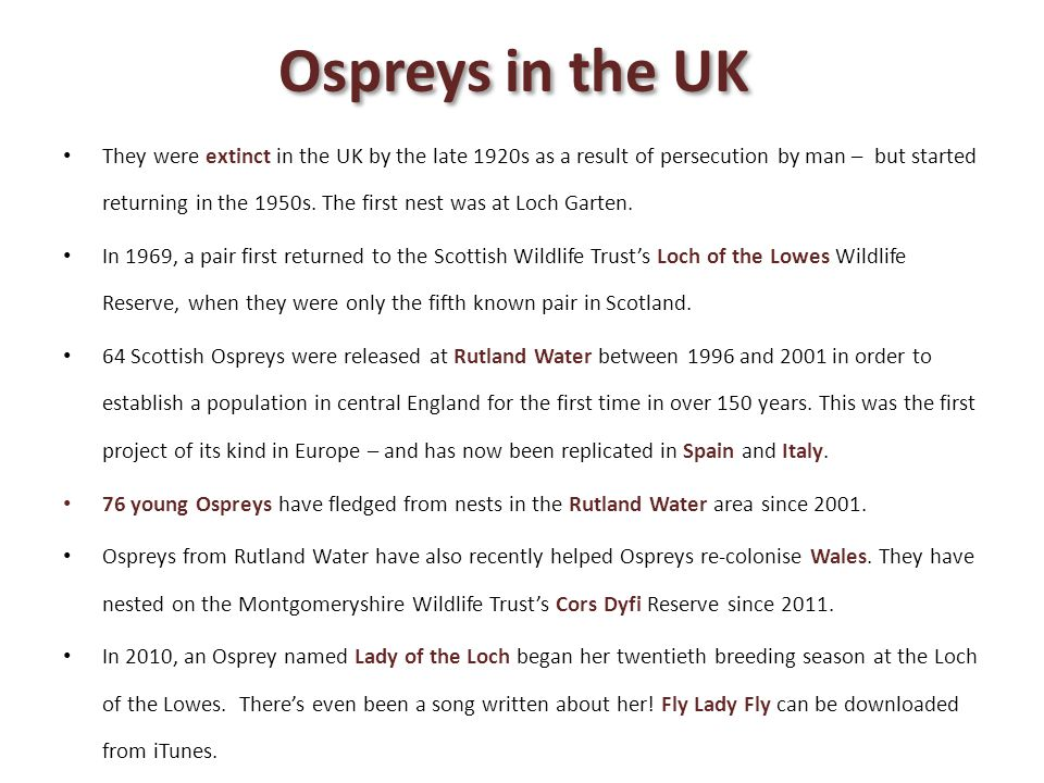 Ospreys in the UK