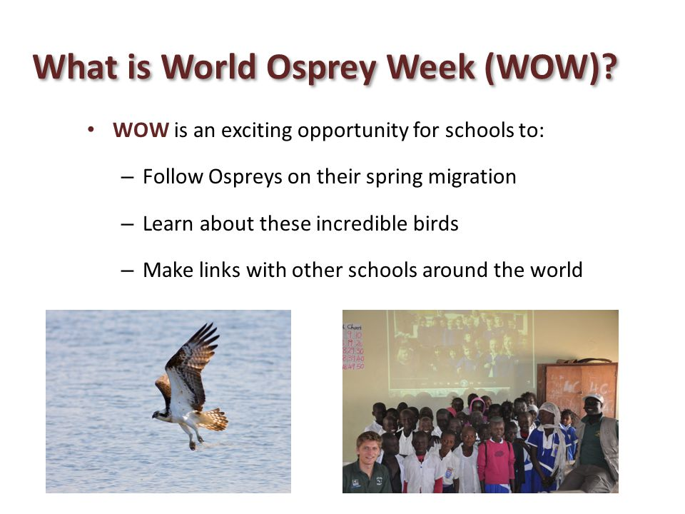 What is World Osprey Week (WOW)