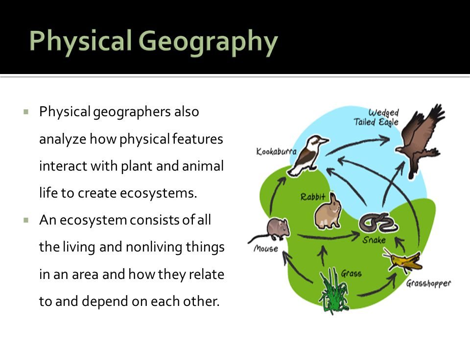Physical Geography Physical geographers also analyze how physical features interact with plant and animal life to create ecosystems.