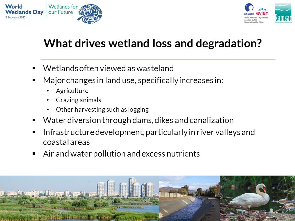 What drives wetland loss and degradation