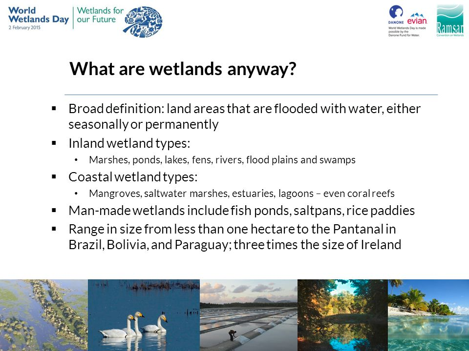 What are wetlands anyway