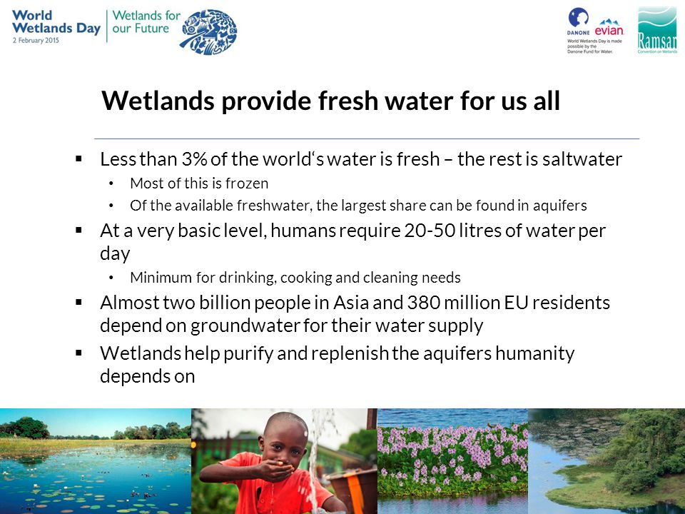 Wetlands provide fresh water for us all